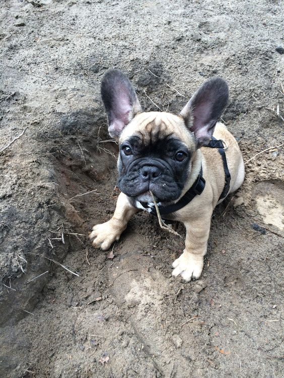 My own personal handmade crater, by my adorable French Bulldog Puppy.
