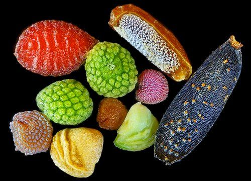 """An amazing microscopic image of the """"Seeds of Wild Flowers"""" by Yanping Wang from the Beijing Planetarium."""