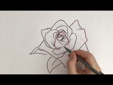 How To Draw Basic Traditional Rose Tattoo Designs By A Tattoo Aritist Clarissa Drawing Jou In 2020 Rose Tattoo Design Tattoo Design Drawings Traditional Rose Tattoos
