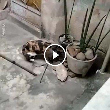 Ratinho fugitivo