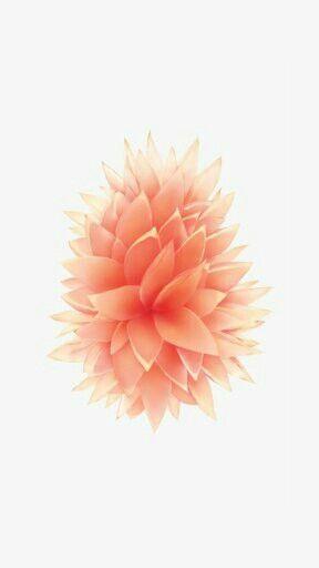 Fond D Ecran Fleur Orange Fond D Ecran Telephone Fond D Ecran Telephone Noel Fond D Ecran Rose Gold