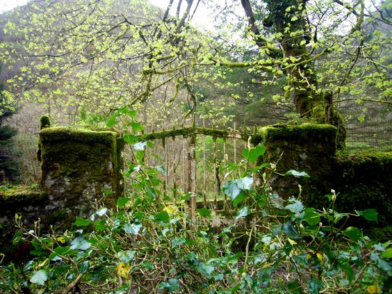rejas de la piscifactoria abandonada ya hace un  tiempo