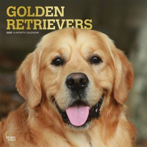 Golden Retrievers 2020 Calendar These Beautiful Dogs Are Loyal