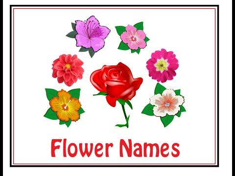 Learn Flowers Name For Kids In English And Hindi फ ल क न म इ ग ल श और ह द म Titulearning Youtube In 2020 Flower Names Different Flowers Flowers