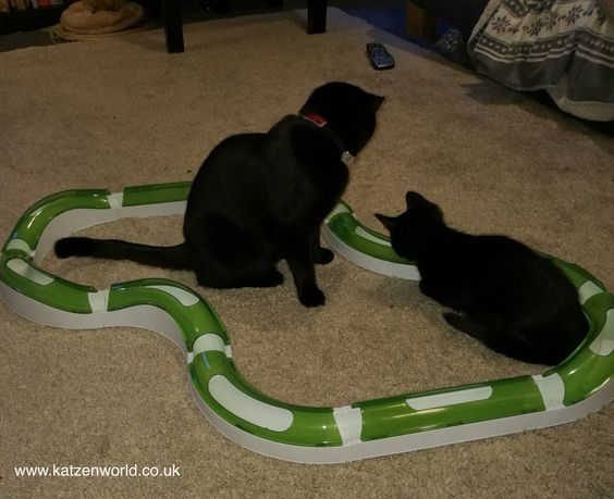 Dexter & Floki: Fun with the Catit Super Circuit find this fantastic photo from Katzenworld  One of the main issues that I have had in introducing my new kitten Floki to my resident cat Dexter is they play fights. Dexter is a very chilled cat, and with a slow, planned…  More   https://katzenworld.co.uk/2016/06/29/catit/