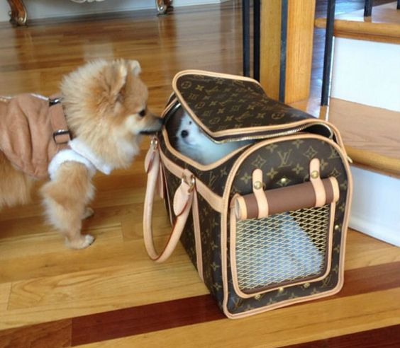 twodogscarrier Though most airlines will allow customers to bring a pet carrier on board for a fee, Southwest has a 2-for-1 rate. Meaning if you have two small dogs that can fit comfortably in one carrier, then you will only be charged for the carrier, and not per pet.