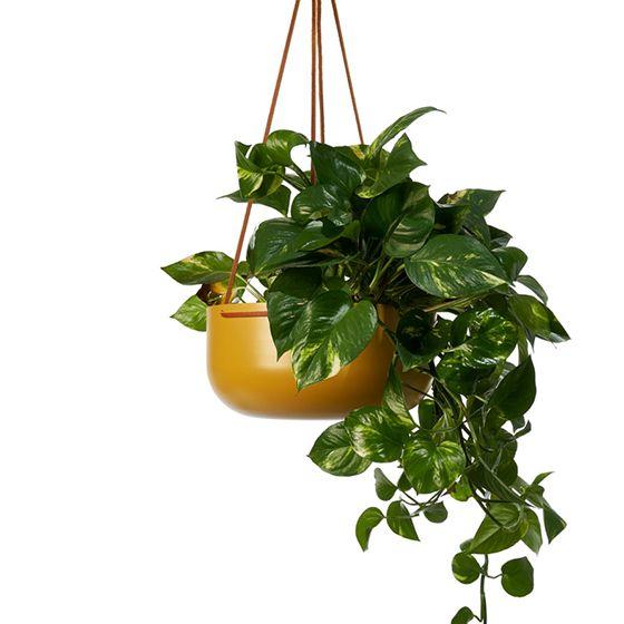 Lightly Design Crush Hanging Planters Indoor Large Planters Hanging Planters