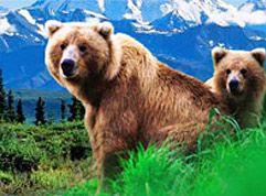 Big savings on Alaska cruises on Carnival. Savings as big as the bears!