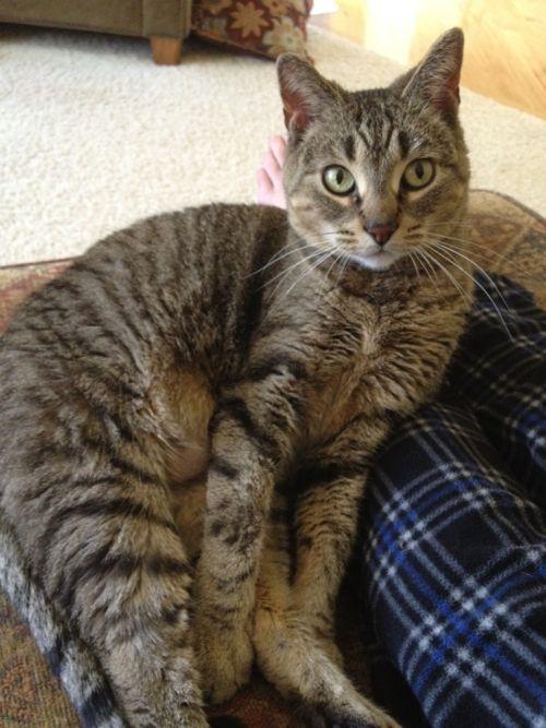 cutecatsaww: Follow For Cute Cats Everyday