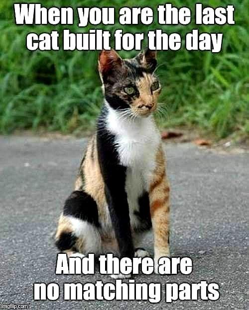 Top Laughing So Hard Cat Memes Cat Meme Just Bite It Funny