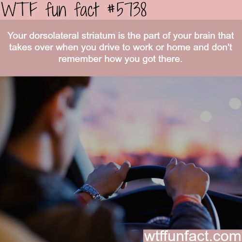 When you drive to work and don't know how you got there - WTF fun facts