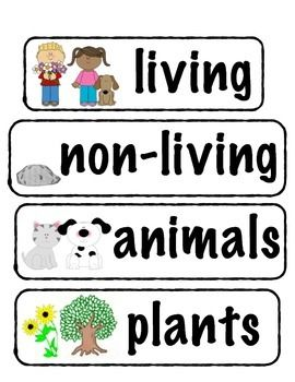 Living/Non-living Vocabulary Words (Plants, Animals, & Life Cycles ...