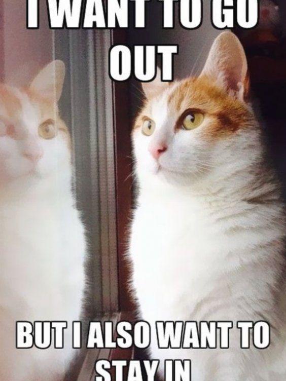 The Monday Meow Hilarious Cat Memes To Get You Laughing Petsrule Cute Meme Catmemes Petmemes Cats In 2020 Funny Grumpy Cat Memes Funny Cat Memes Cat Memes Clean
