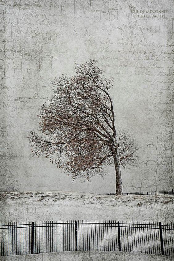 bent+tree+windblown+landscape+photography+by+judeMcConkeyPhotos
