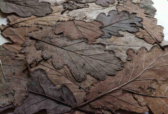 Alice Fox oak leaf quilt in progress