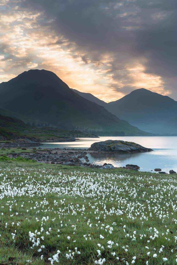 Sunrise Over The Cotton Grass Wastwater The Lake District Lake District England Lake District Landscape