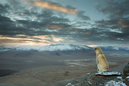 Himalayan Dog Photo by Sebastian Wahlhuetter -- National Geographic Your Shot