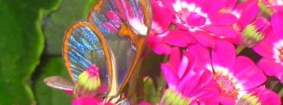 Couverture facebook HD papillon