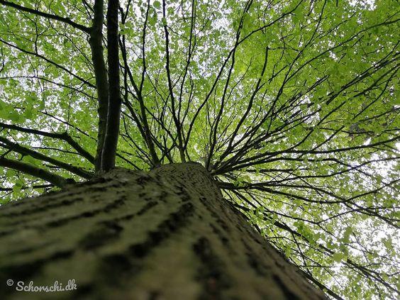 Impression Des Waldes Wald Nature Natur Naturephotography Naturfotografie Forest Waldliebe Baum Baume Tree Baumkrone Baumst In 2020 Tree Trunk Tree Plants