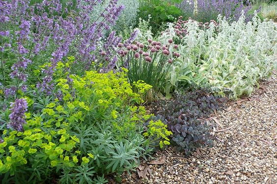 Beth Chatto's Gravel Garden. This is a very English garden, despite the generally desert-like conditions. Yes, there are grasses and euphorbia but also: the dark sedum 'Ruby Glow', Nepeta, common chive, and Lamb's Ears. - (Euphorbia 'Blue Haze' is £6.99 from Larch Cottage Nurseries).  Ordinary plants put together by an artist.