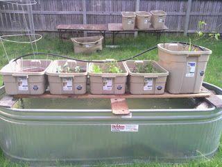 Aquaponics system buckets and trout on pinterest for Koi aquaponics