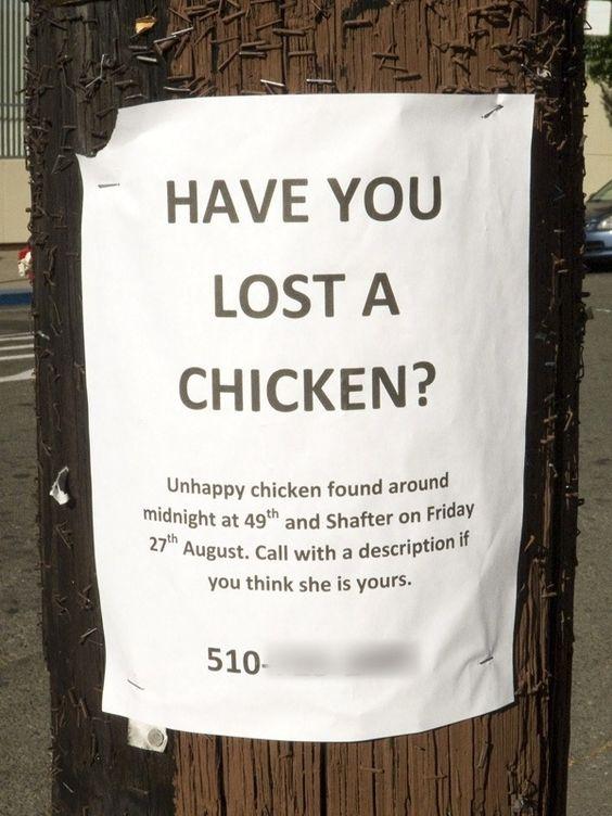 Unhappy chicken. Ha ha!