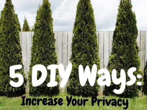 5 DIY Ways Increasing Yard Privacy I Like The Bamboo