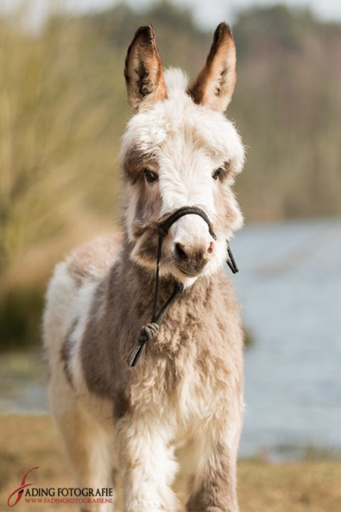 Such a cute donkey!: