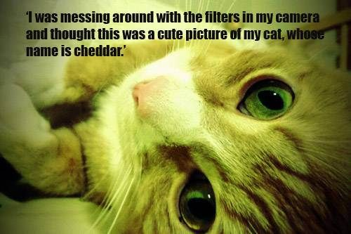 Daily Awww: Check out your C-U-T-E pets! (36 photos) – theBERRY