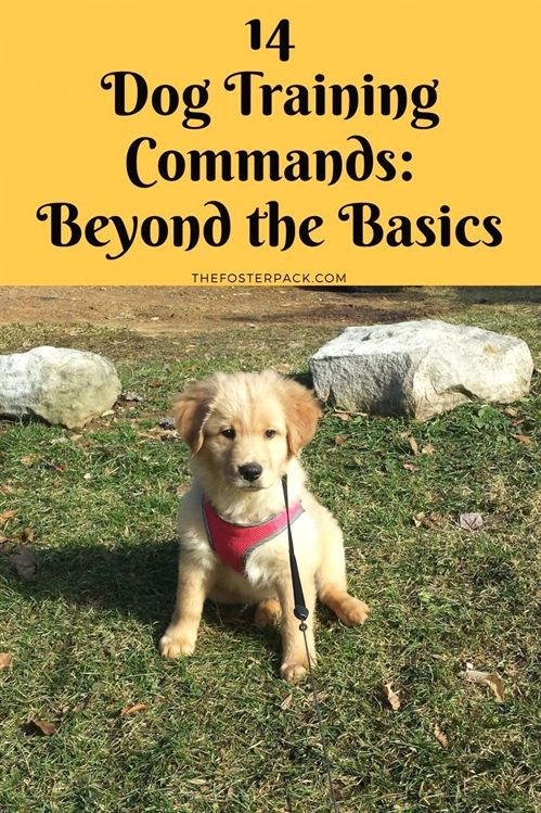 Train Your Dog To Be Well Behaved With These Tips Basic Dog Training Dog Training Dog Training Techniques