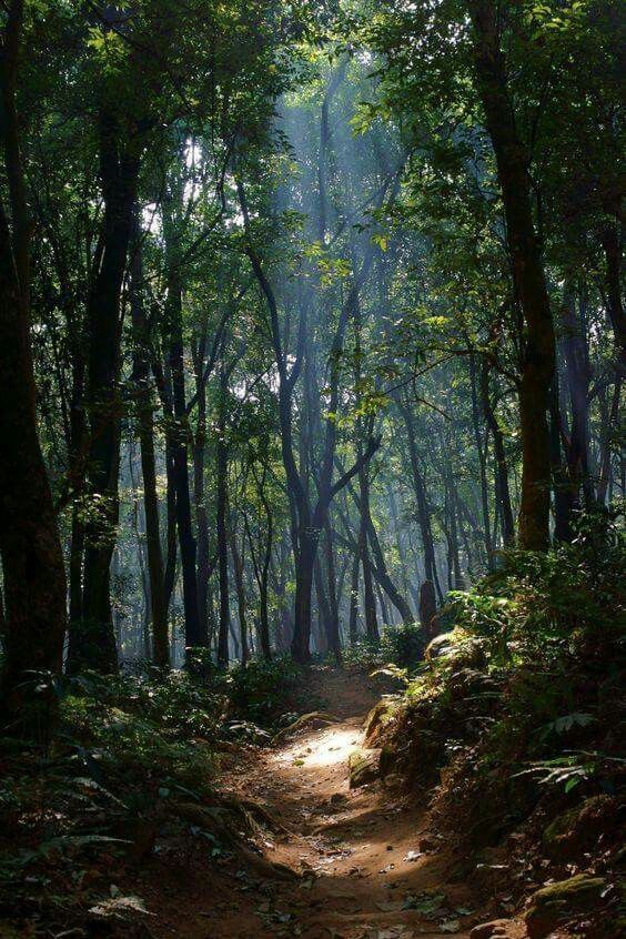 Pin By The Collector On 숲 Forest Landscape Nature Photography Mystical Forest