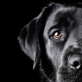 looks like my doggy :)