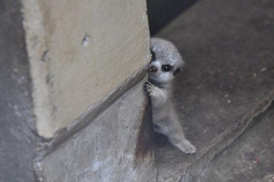 ペット おしゃれまとめの人気アイデア Pinterest Torakichikun T ミーアキャット 動物 動物 癒し