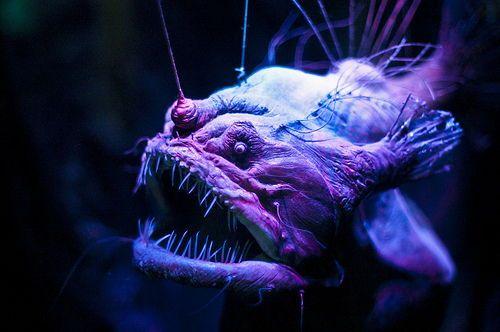 20 πλάσματα του βυθού που θα πίστευες ότι προέρχονται από ταινία φαντασίας