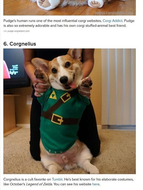 "Just found out that Corgnelius was ranked #6 on Buzzfeed's, ""40 Most Influential Corgis of 2012""! It is such an honor to even be in the same category as the corgi greats, like Otis and Pudge. Pudge was actually the reason i wanted to get a corgi. I flipped through all of his archived photos, fell in love (seriously, look at his puppy pictures), and knew i needed some stumpy legs in my life.  if you see Corgnelius waddling around the streets of LA, please don't mention thi"