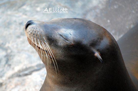 Sunny Days Seal Fine Art Photography 8 x 10 Ocean Art by nyla1202, $14.00