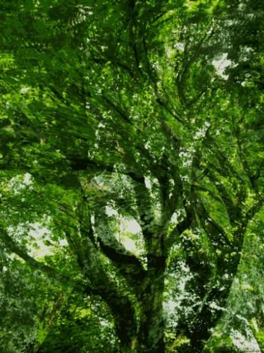 "Saatchi Art Artist Kenneth Grzesik; New Media, ""Mystic Forest 2"" #art"