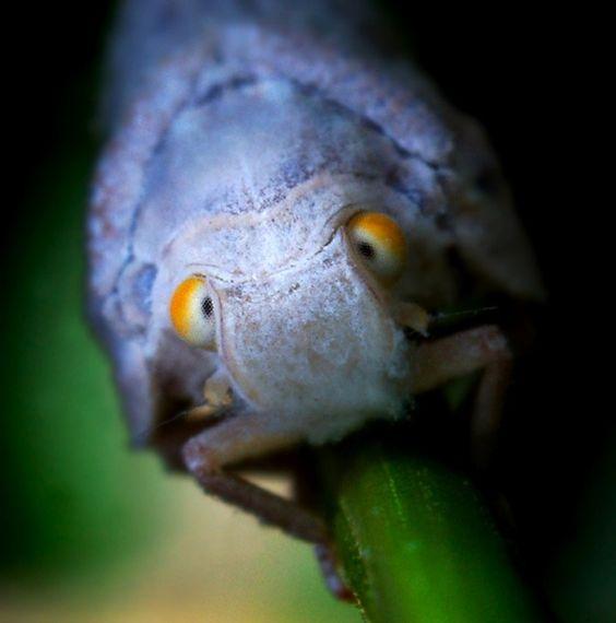 Macro fotografias de insetos - CANTTIM