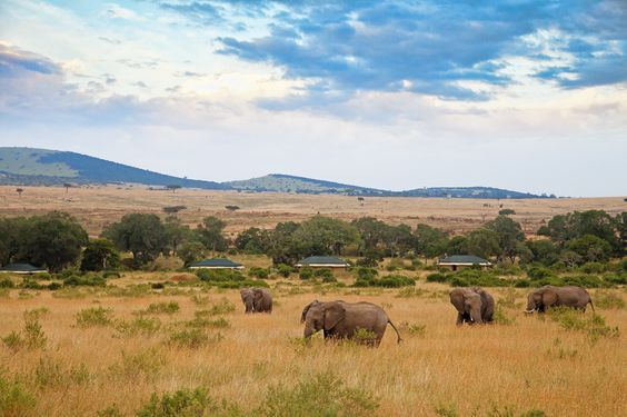 In the midst of the Mara, this is game-viewing at its very best