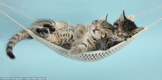 Time for a cat nap: Stanley and Fosset enjoy a snooze