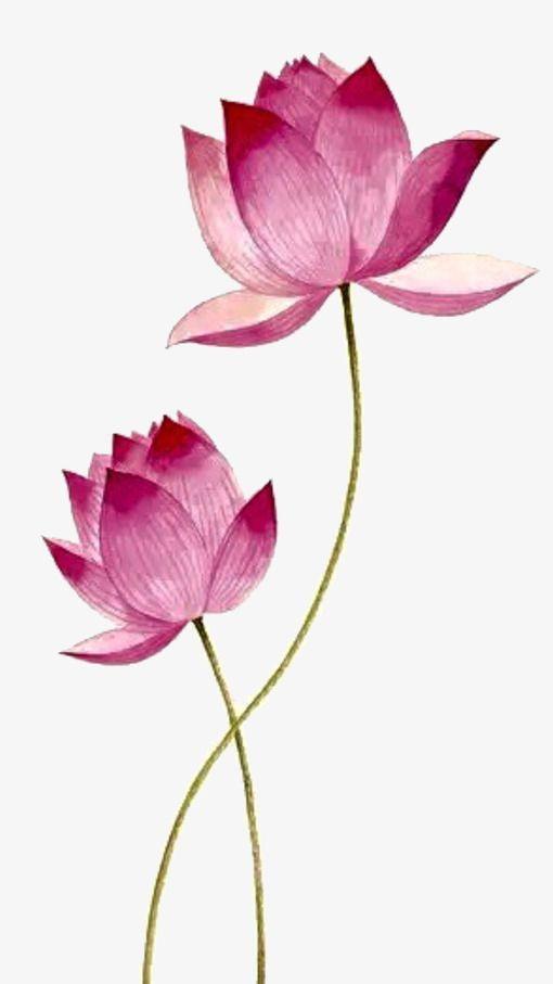 Pink Lotus Png And Psd Lotus Pink Png Psd Lotus Art Flower Drawing Flower Art Painting
