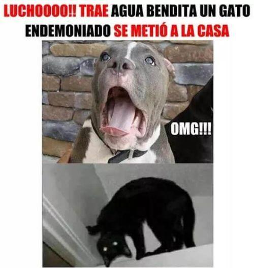Perros Graciosos Http Enviarpostales Es Perros Graciosos 454 Perros Animales Animal Memes Funny Memes Memes