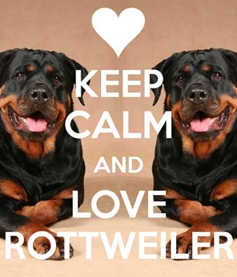 Click visit site and Check out Cool Rottweiler T-shirts. This website is outstanding. Tip: You can search your name or your favorite shirts at search bar on the top.