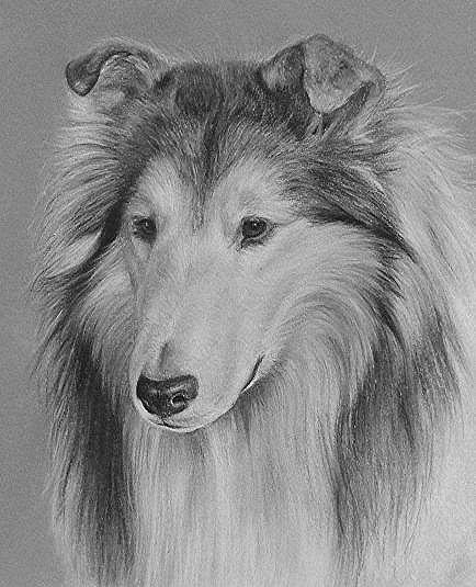 chiens uniques aux monde  2c89a4db3f26cdecae1af8a700820208
