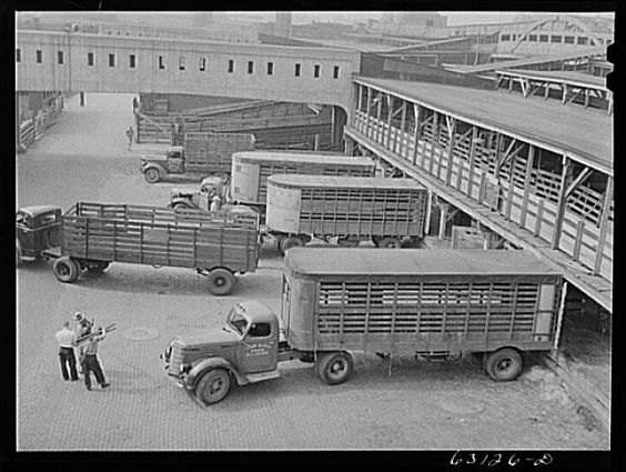 Old Livestock Trucks A load of cattle,