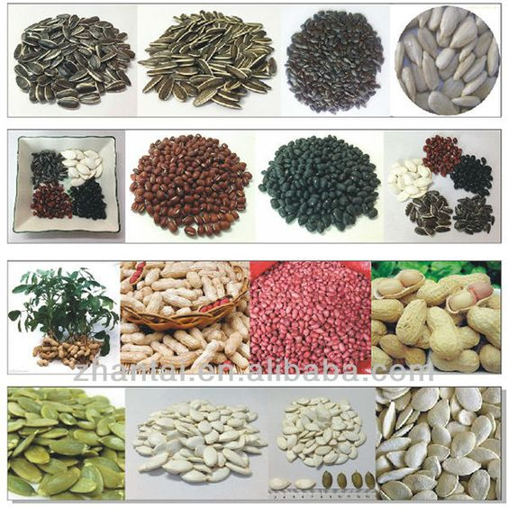 seeds companies export different types of agriculture products seed 950~1398 | Vegetable seeds/Fruit seeds & Seed packets