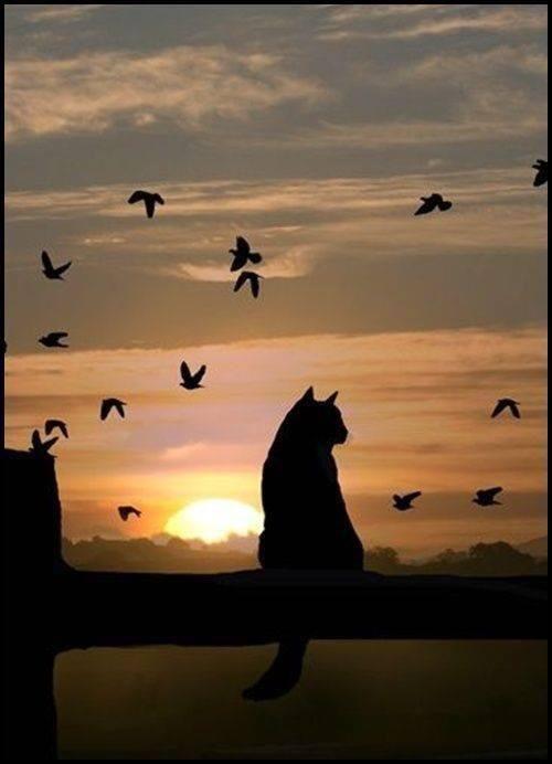 夕暮れの鳥と猫