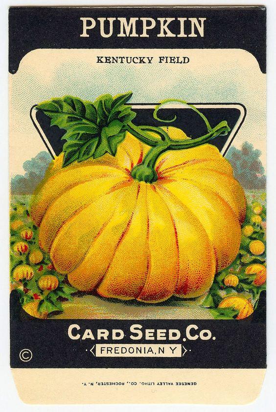 Vintage Halloween Clip Art - Adorable Pumpkin Seed Packet ...