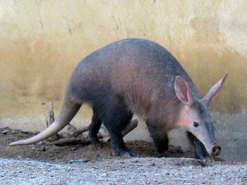 alt dating anteater