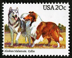 Alaskan Malamute and Collie stamp from 1984 Dogs issue.